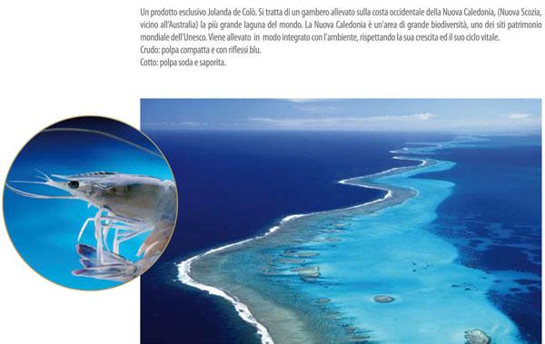 gambero-blu-obsiblue-jolanda-de-colo-small