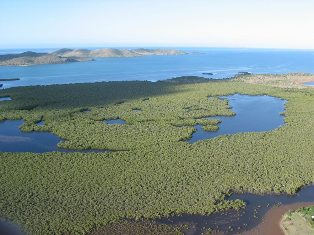 mangrove-nouvelle-calédonie-BD