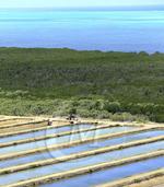 France, Nouvelle Caledonie, Grande-Terre, Province Sud, Bourail, ferme aquacole, ecloserie EORI, elevage de crevettes bleues